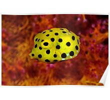 Yellow cube on red coral Poster