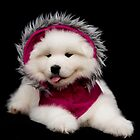 Samoyed Puppy by Tawnydal