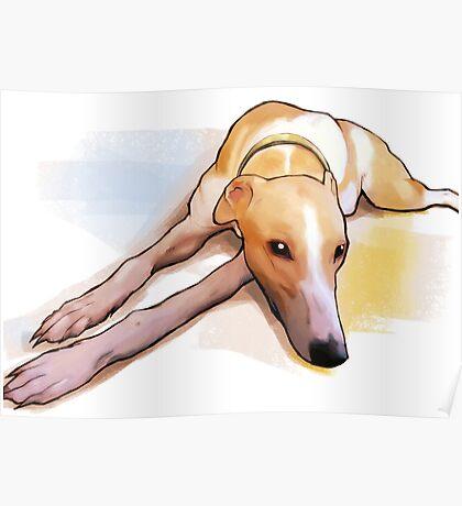 Bored grey hound Poster