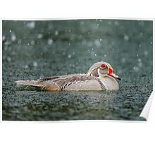 Silver Wood Duck Profile Poster