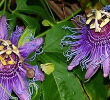 Passionate about purple flowers by ♥⊱ B. Randi Bailey