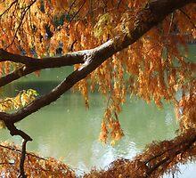 Colorful Fall Bald Cypress by ROBERTDBROZEK