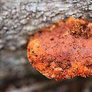 Fungi by MiloAddict