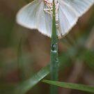 Moth by MiloAddict