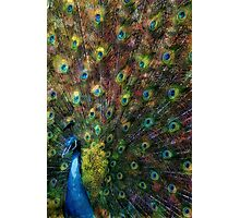 Rainbow Peacock Photographic Print