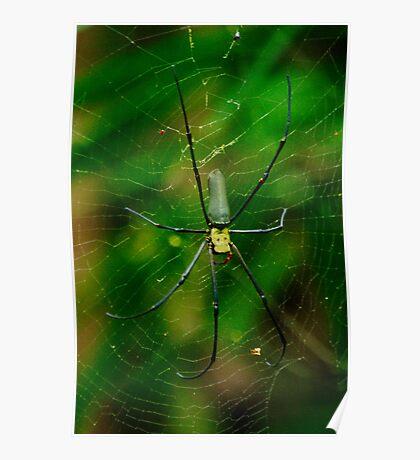 Golden Orb Spider Poster
