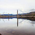 Lake Rowallan Reflections by Damon Colbeck