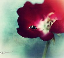 Ladybird on rose by Ellen van Deelen
