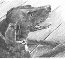 Black lab on the deck drawing by Mike Theuer