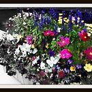 Flower Box by Adrena87