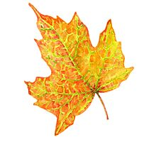 Red Maple Leaf by LeeAngold