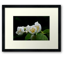 White Tree Blossom Framed Print