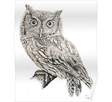 Eastern Screech Owl (Megascops asio), 2012, Pencil Poster