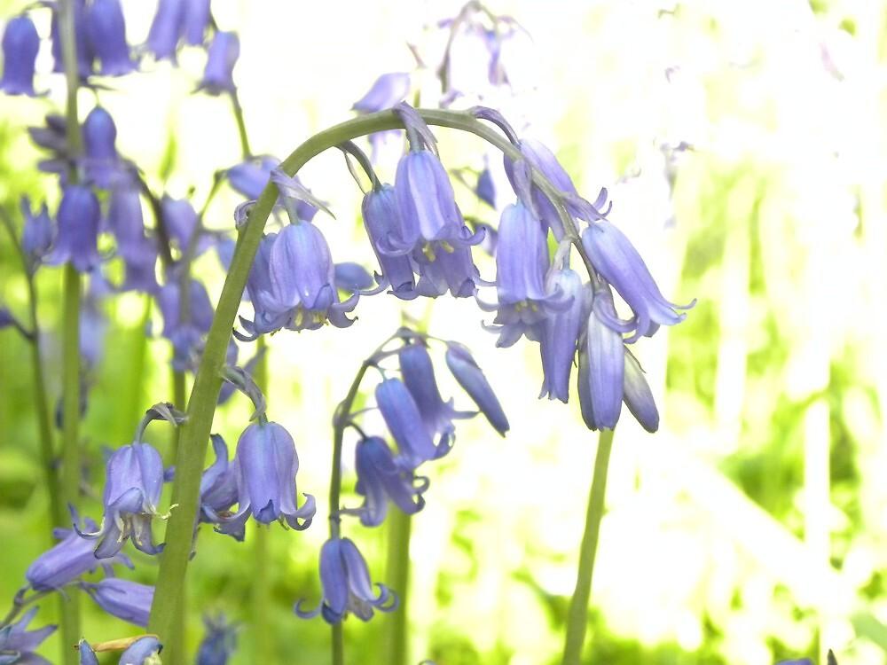 Bluebells of The Woods by Sarah Jane Bingham