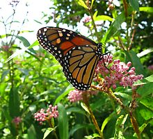 Delightful Monarchs by MarianBendeth