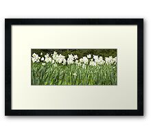 Field of Daffs Framed Print