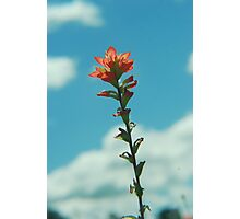 Red/pink Flower  Photographic Print