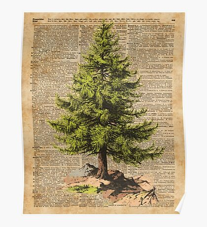 Pine Tree,Cedar Tree,Forest,Nature Dictionary Art,Christmas Tree Poster