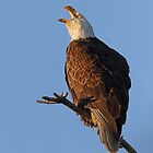 Bald Eagle at Sunset by WorldDesign