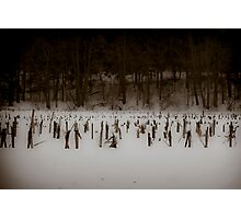Cold Winter #3 Photographic Print