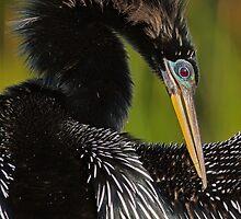 Avian Elegance by William C. Gladish, World Design