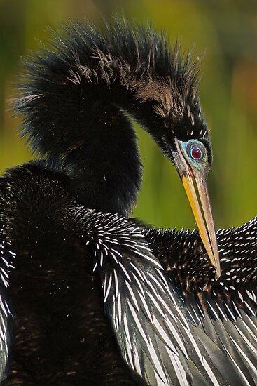Avian Elegance by William C. Gladish