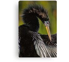 Avian Elegance Canvas Print