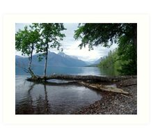 Fallen Aspen, Lake McDonald - Glacier National Park, MT Art Print