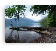 Fallen Aspen, Lake McDonald - Glacier National Park, MT Canvas Print