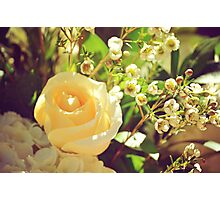 rose flowers  Photographic Print
