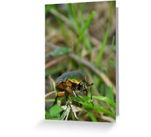 Beetle in the Grass #2 Greeting Card