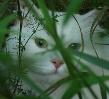 Grass hideout by Marie-Eve Boisclair