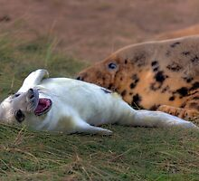 The Donna Nook Grey Seal Colony by Paul Thompson Photography