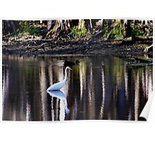 Manatee Springs Bird Poster