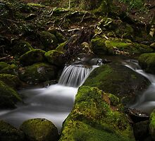Little Fisher River by Damon Colbeck