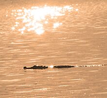 A sparkling gator ! by jozi1