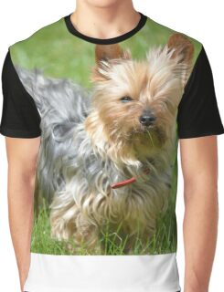 mini yorkie dog on the grass Graphic T-Shirt
