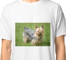 mini yorkie dog on the grass Classic T-Shirt