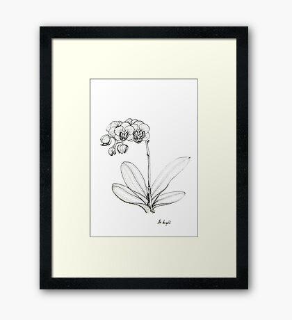 Miniature Phalaenopsis Orchid Framed Print