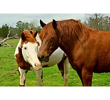 horse kisses Photographic Print