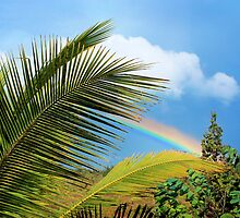 Tropical Rainbow by Ellen Cotton