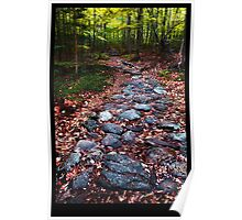 Stone Path Poster