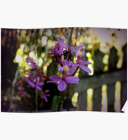 Tiny Orchids and a Picket Fence Poster
