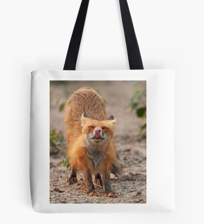 Red Fox Stretch - Algonquin Park, Canada Tote Bag