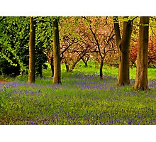 Spring in the Woods Photographic Print