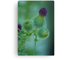 Prickly Bracts Canvas Print