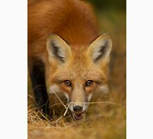 Red Fox close-up, Algonquin Park Unisex T-Shirt