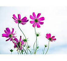 Breezy Blooms Photographic Print