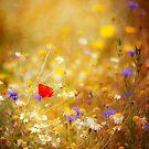 The Wildflower Garden by Rachael Talibart