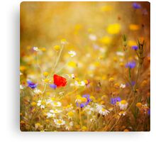 The Wildflower Garden Canvas Print